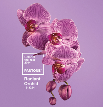 pantone-color-year-2014-radian-orchid